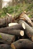 Ceppi di legname Immagine Stock Libera da Diritti