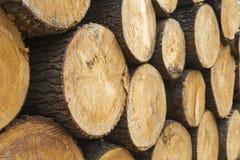 Ceppi di legno Fotografia Stock Libera da Diritti