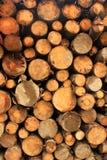 Ceppi tagliati della legna da ardere per il fuoco di inverno Immagine Stock