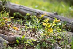 Ceppo caduto circondato dalle foglie variopinte in Rocky Mountain National Park fotografia stock