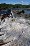 Ceppo candeggiato del legname galleggiante con grano ondulato sulla spiaggia con gli alberi e le montagne dell'isola di Vancouver fotografia stock libera da diritti