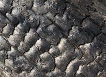 Ceppo carbonizzato Fotografia Stock Libera da Diritti