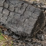 Ceppo carbonizzato, Brightling, East Sussex, Regno Unito fotografie stock libere da diritti
