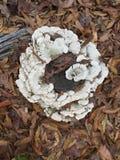 Ceppo dei funghi Fotografia Stock