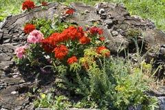 Ceppo del fiore Fotografia Stock Libera da Diritti