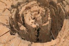 Ceppo dell'albero Immagini Stock