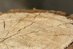 Ceppo dell'albero abbattuto fotografia stock libera da diritti