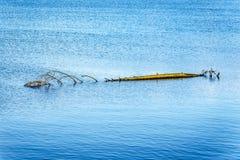 Ceppo dell'albero che galleggia in Pitt Lake vicino alla città dell'acero Ridge in Fraser Valley della Columbia Britannica Immagine Stock