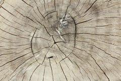 Ceppo della foto con un bello modello di legno Fotografia Stock