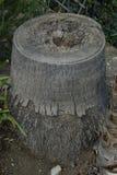 Ceppo della palma Fotografia Stock Libera da Diritti