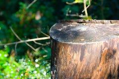 Ceppo di albero Fotografia Stock