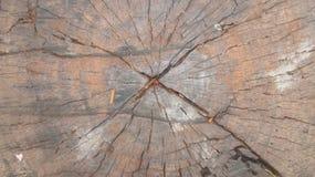 Ceppo di albero Immagine Stock