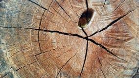 Ceppo di albero Immagini Stock Libere da Diritti
