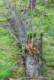 Ceppo di albero Fotografie Stock Libere da Diritti
