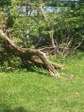 Ceppo di albero Immagine Stock Libera da Diritti