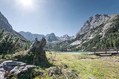 Ceppo di albero al seebensee del lago della montagna in alpi Fotografie Stock