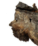 Ceppo di albero come scultura fotografia stock