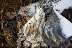 Ceppo di albero con neve Immagine Stock Libera da Diritti