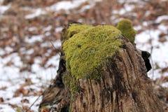 Ceppo di albero coperto da muschio Fotografia Stock Libera da Diritti