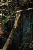Ceppo di albero decomposto immagini stock libere da diritti