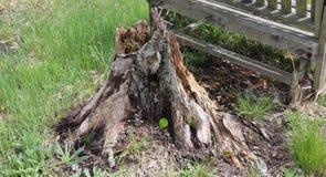 Ceppo di albero, decomposto, erba, fuori immagine stock libera da diritti
