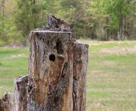 Ceppo di albero, decomposto, foro del picchio, fuori immagine stock libera da diritti