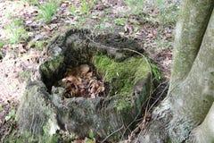 Ceppo di albero, decomposto, muschio, fuori fotografia stock