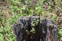 Ceppo di albero, decomposto, vegetazione, fondo vago, fuori fotografia stock