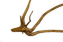 Ceppo di albero del Driftwood su fondo bianco Immagini Stock