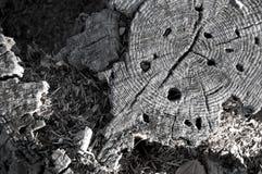 Ceppo di albero di decomposizione Immagine Stock Libera da Diritti