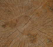 Ceppo di albero fresco del taglio Fotografia Stock