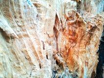 Ceppo di albero interno Fotografia Stock Libera da Diritti