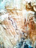 Ceppo di albero interno Immagine Stock Libera da Diritti