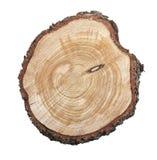 Ceppo di albero isolato su priorità bassa bianca Immagine Stock Libera da Diritti