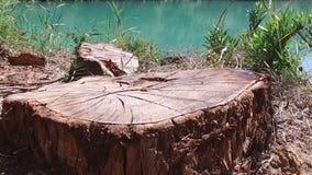Ceppo di albero lento in Forest Caminito del Rey 01 stock footage