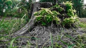 Ceppo di albero nella foresta immagine stock libera da diritti