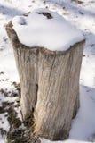 Ceppo di albero in neve Fotografie Stock Libere da Diritti