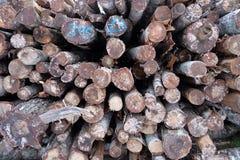Ceppo di albero, struttura di legno Fotografia Stock
