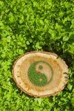 Ceppo di albero sull'erba con il simbolo ying di yang Immagine Stock Libera da Diritti