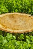Ceppo di albero sull'erba fotografia stock libera da diritti