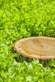 Ceppo di albero sull'erba immagine stock libera da diritti
