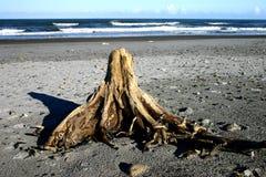 Ceppo di albero sulla spiaggia Immagini Stock Libere da Diritti