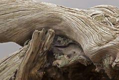 Ceppo di legno Immagini Stock
