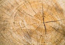 Ceppo di legno Fotografia Stock