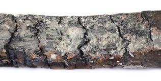 Ceppo di legno bruciato Immagini Stock Libere da Diritti