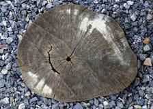 Ceppo di legno di progettazione del giardino Immagini Stock Libere da Diritti