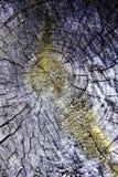 Ceppo di legno incrinato, cerchi concentrici, moos immagini stock libere da diritti