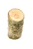 Ceppo di legno isolato sui precedenti bianchi Immagini Stock Libere da Diritti