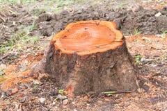 Ceppo di un albero del taglio fotografia stock libera da diritti