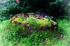 Ceppo fantastico nella foresta incantata fotografie stock libere da diritti